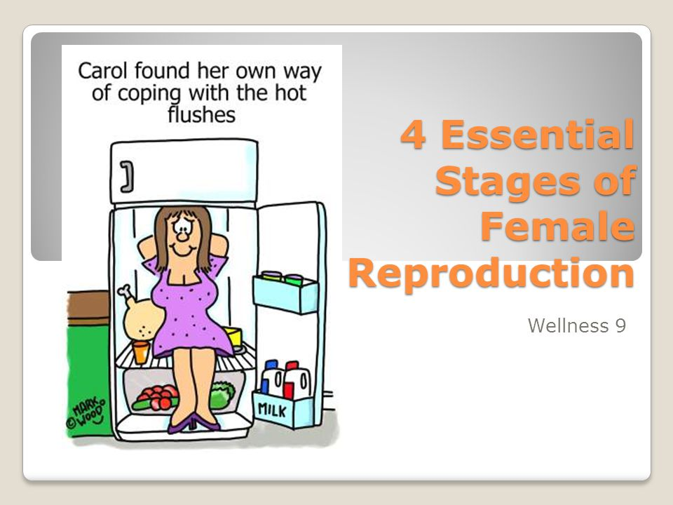 Ovarian Hormones Progesterone – Sustains pregnancy.
