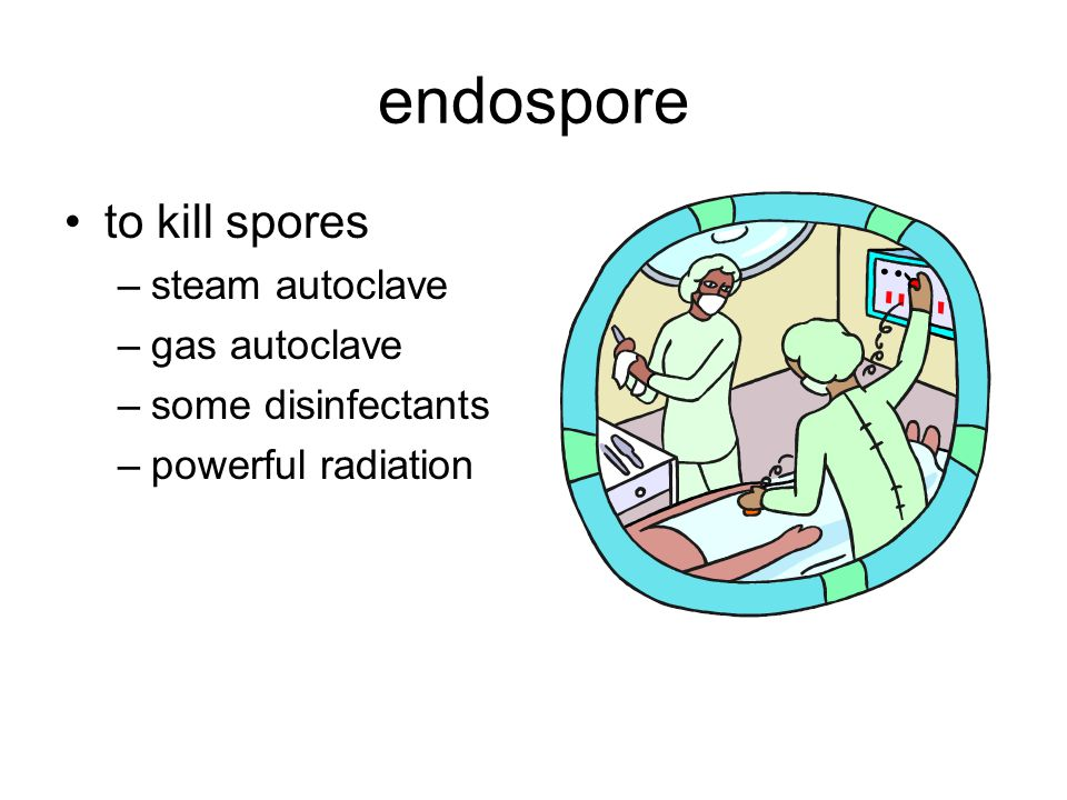 endospore to kill spores –steam autoclave –gas autoclave –some disinfectants –powerful radiation