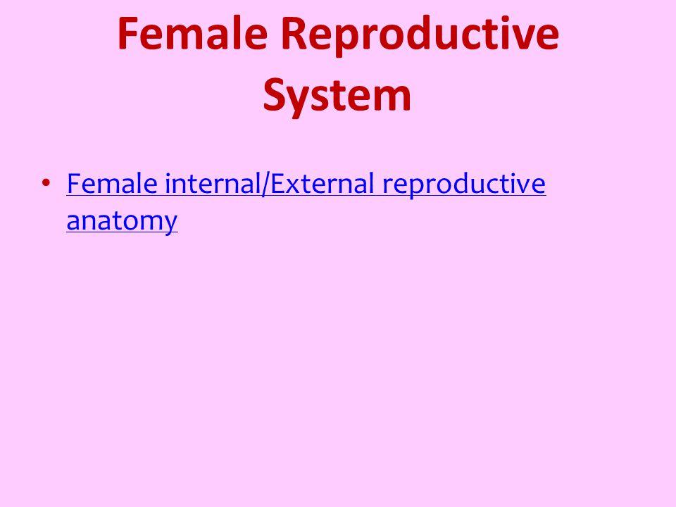 Female Reproductive System Female internal/External reproductive anatomy Female internal/External reproductive anatomy