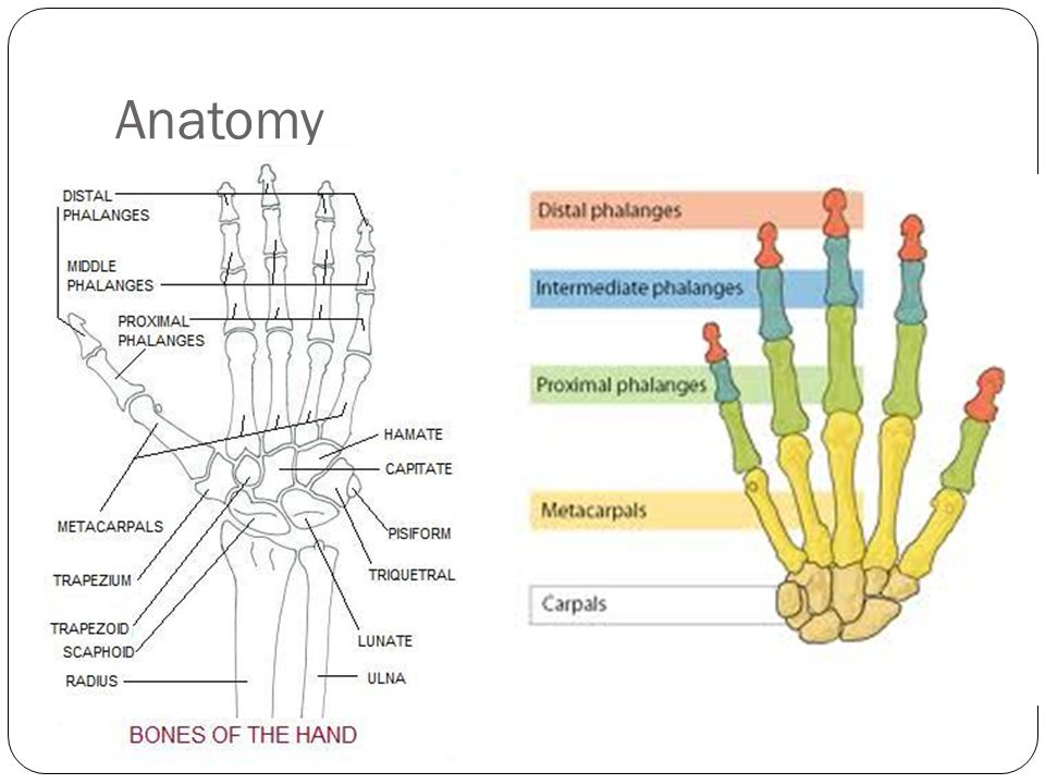 Ulnar nerve anatomy cross section