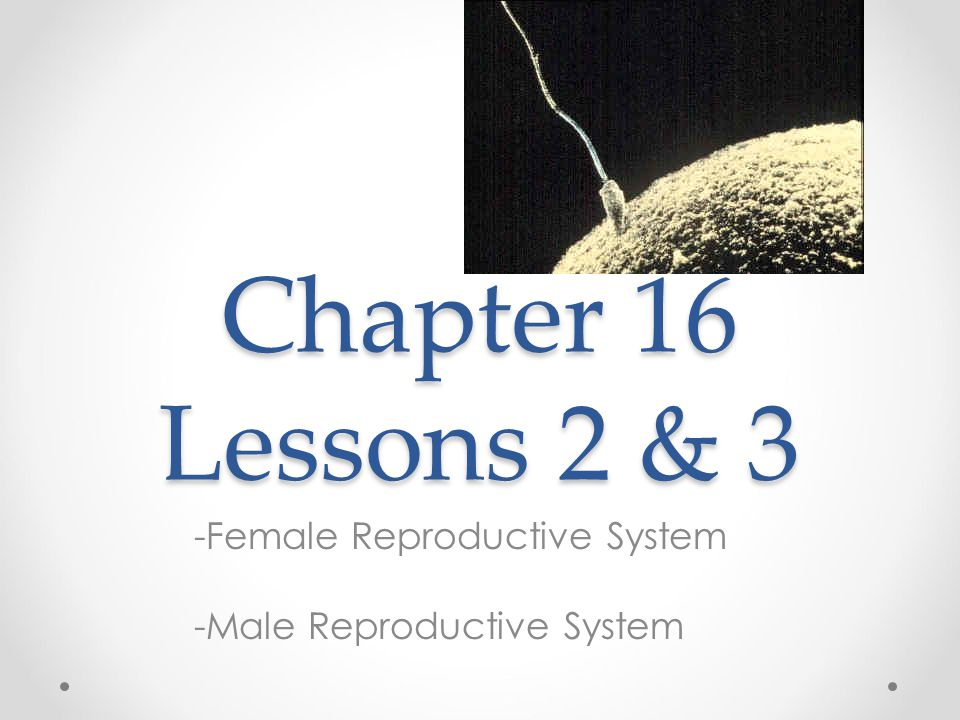 Chapter 16 Lessons 2 & 3 -Female Reproductive System -Male Reproductive System
