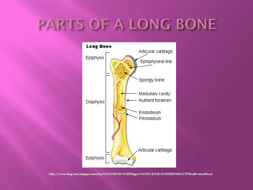http://www.bing.com/images/search?q=LONG+BONE+PARTS&qpvt=LONG+BONE+PARTS&FORM=Z7FD&adlt=strict#focal