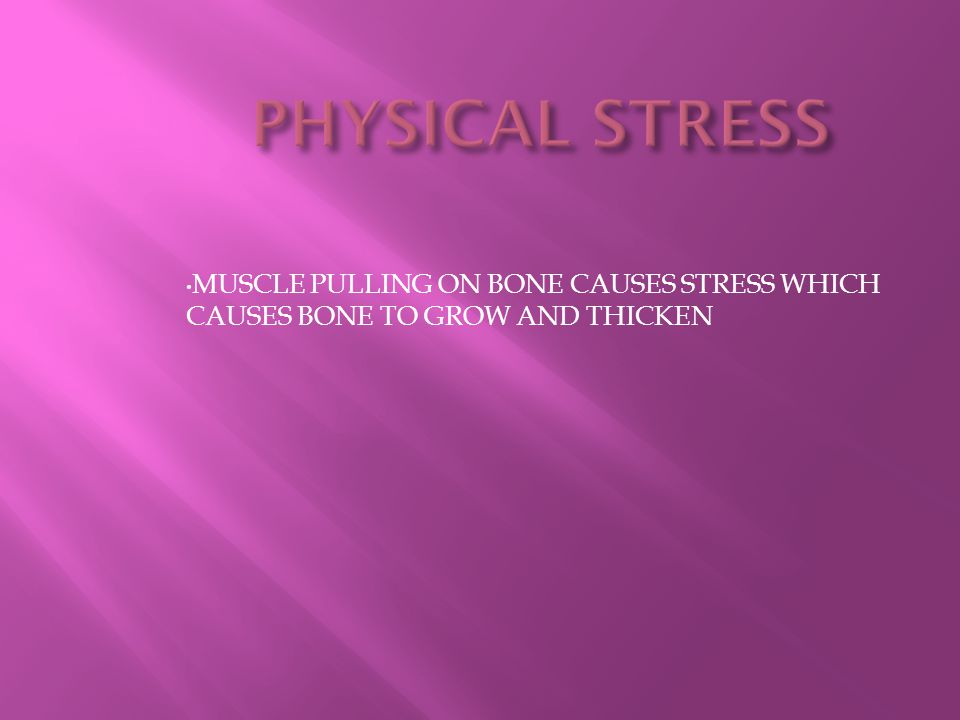 MUSCLE PULLING ON BONE CAUSES STRESS WHICH CAUSES BONE TO GROW AND THICKEN