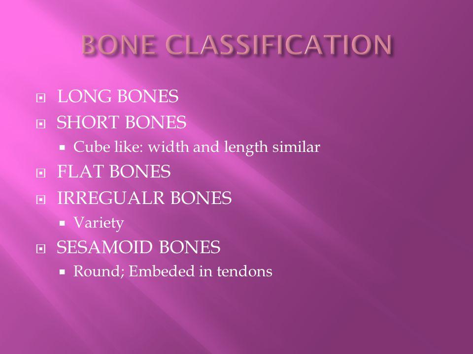 www.bing.com/images/search?q=short+bone+image&FORM=IGRE&qpvt=short+bone+image&adlt