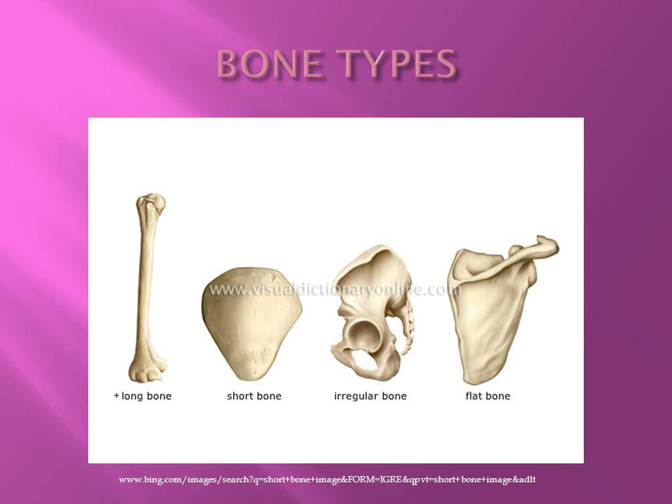 http://www.bing.com/images/search?q=sesamoid+bone+image&FORM=IGRE6&adlt=strict#focal=9e6adf7fe