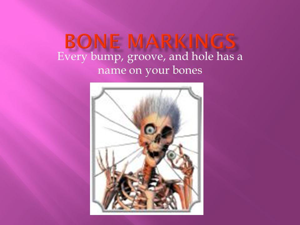 BONE REMODLEING: OSTEOBLASTS VS.