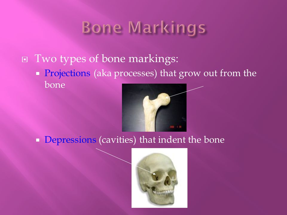  Two types of bone markings:  Projections (aka processes) that grow out from the bone  Depressions (cavities) that indent the bone