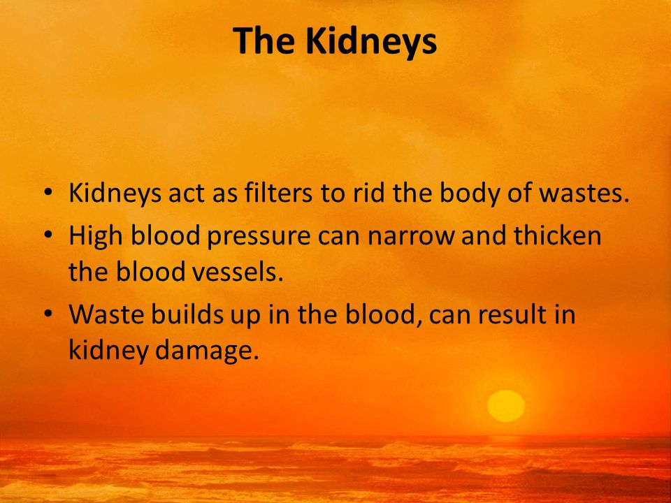 The Kidneys Kidneys act as filters to rid the body of wastes.