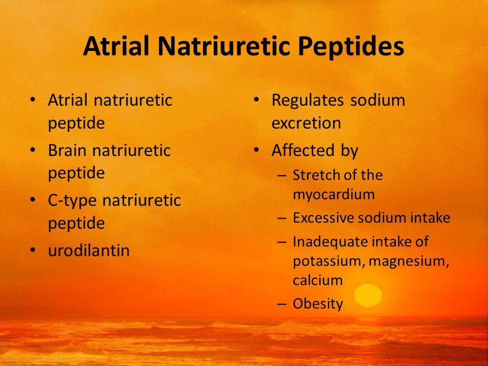 Atrial Natriuretic Peptides Atrial natriuretic peptide Brain natriuretic peptide C-type natriuretic peptide urodilantin Regulates sodium excretion Affected by – Stretch of the myocardium – Excessive sodium intake – Inadequate intake of potassium, magnesium, calcium – Obesity