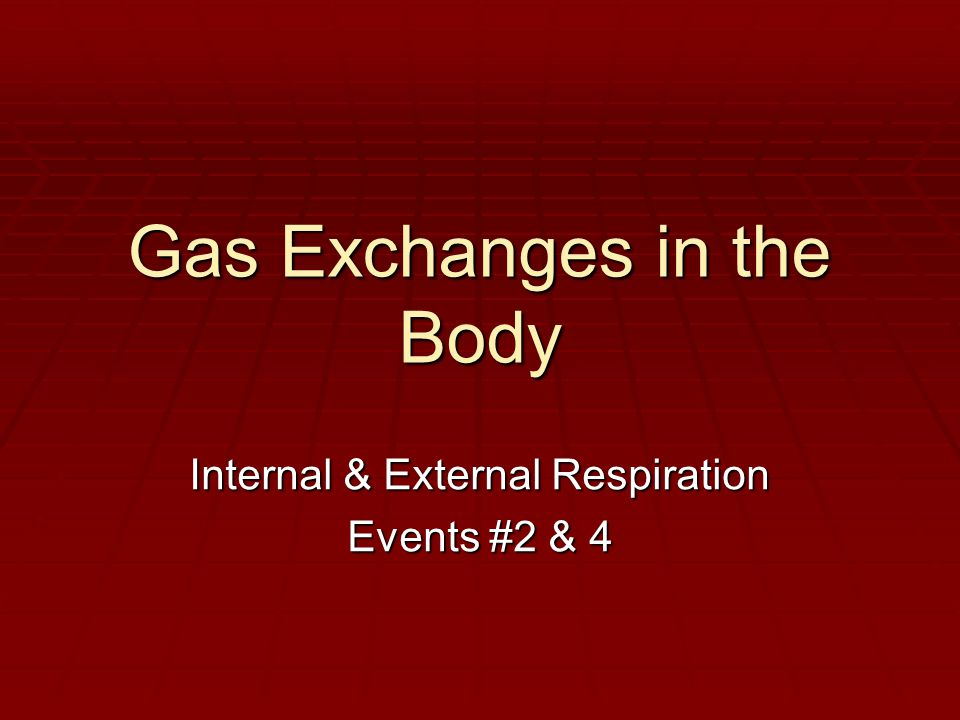 Gas Exchanges in the Body Internal & External Respiration Events #2 & 4