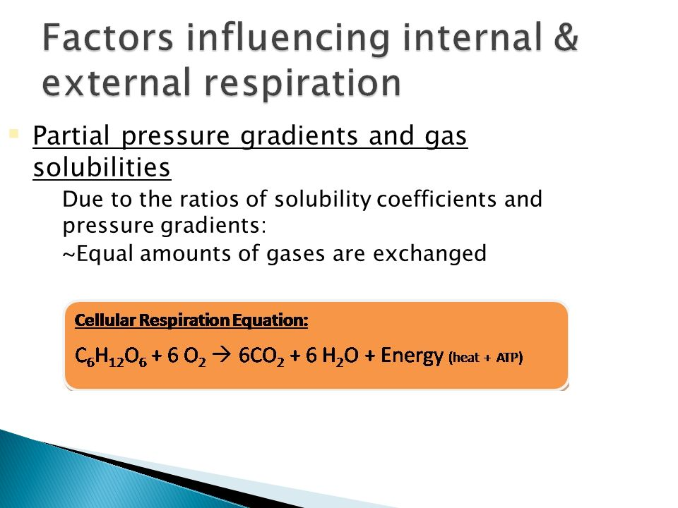  Partial pressure gradients and gas solubilities  Due to the ratios of solubility coefficients and pressure gradients:  ~Equal amounts of gases are exchanged