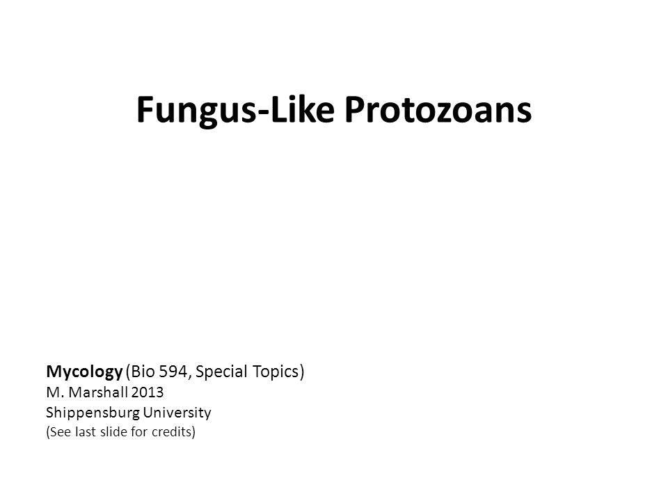 Fungus-Like Protozoans Mycology (Bio 594, Special Topics) M.