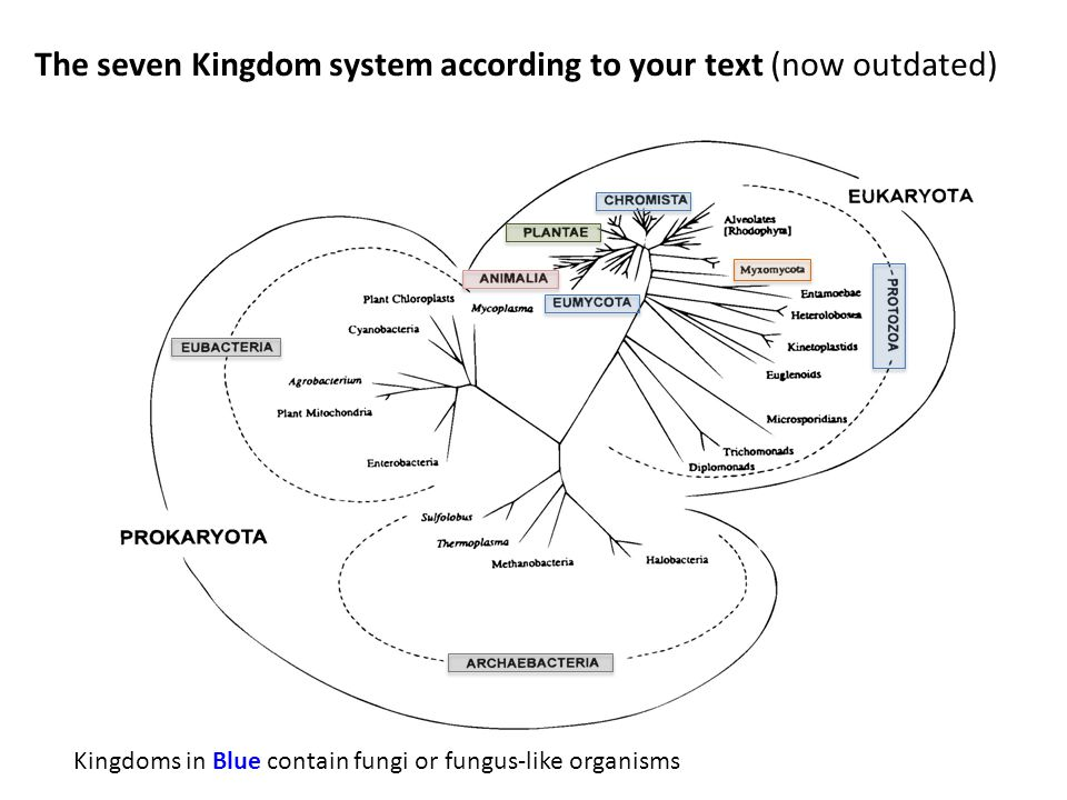 The seven Kingdom system according to your text (now outdated) Kingdoms in Blue contain fungi or fungus-like organisms