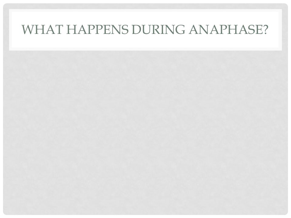 WHAT HAPPENS DURING ANAPHASE