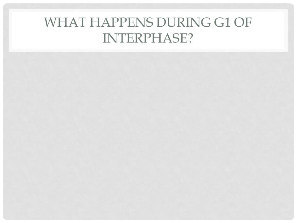 WHAT HAPPENS DURING G1 OF INTERPHASE