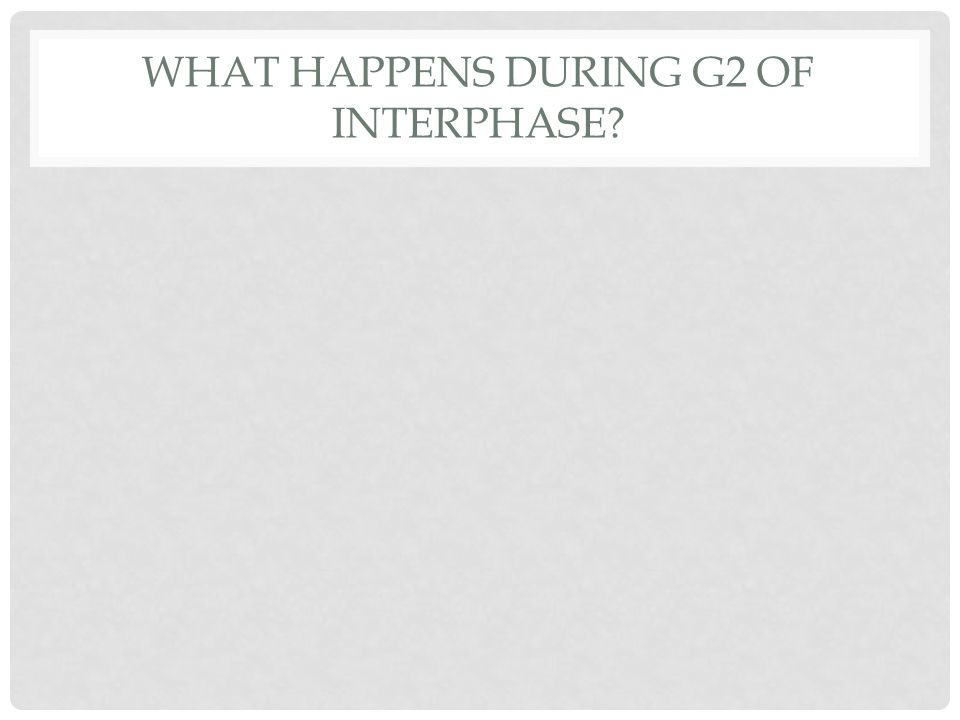 WHAT HAPPENS DURING G2 OF INTERPHASE