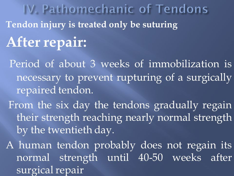 Tendon injury is treated only be suturing After repair: Period of about 3 weeks of immobilization is necessary to prevent rupturing of a surgically repaired tendon.