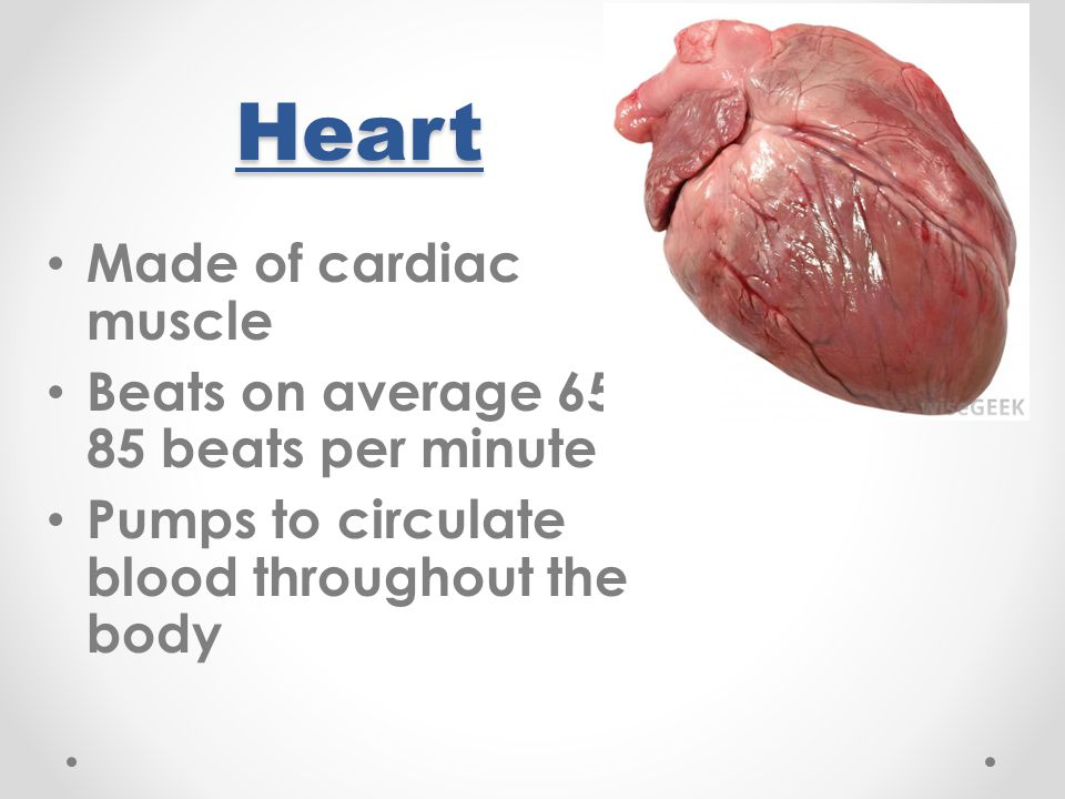 5) Oxygenated blood returns to the left atrium from the lungs through the pulmonary veins