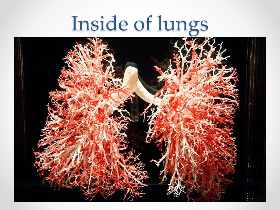 Inside of lungs