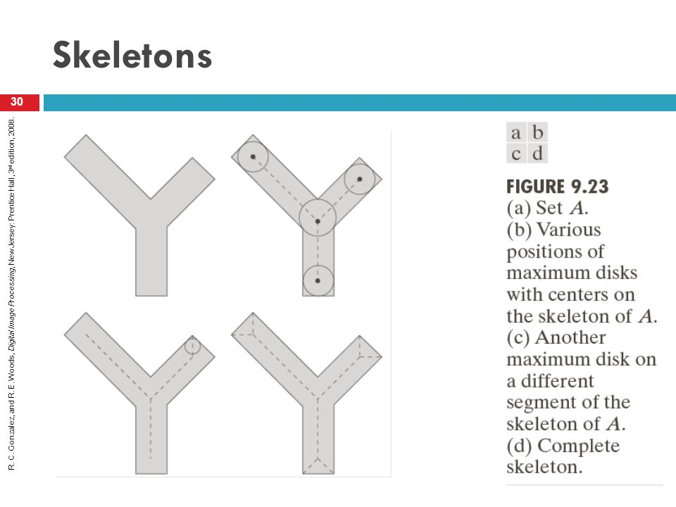 R. C. Gonzalez, and R. E. Woods, Digital Image Processing, New Jersey: Prentice Hall, 3 rd edition, 2008. Skeletons 30