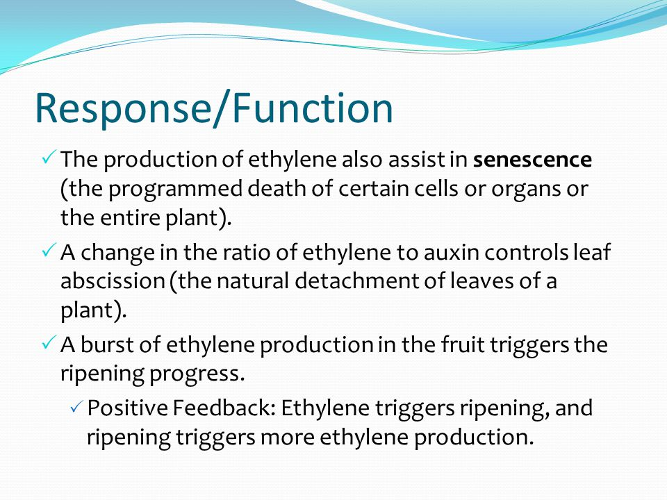 Response/Function  The production of ethylene also assist in senescence (the programmed death of certain cells or organs or the entire plant).
