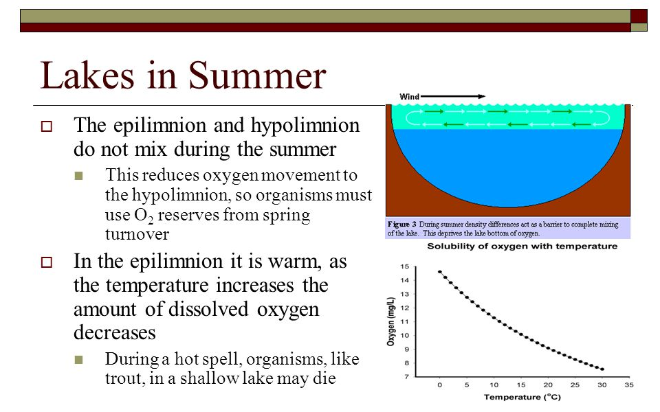 Lakes in Summer  The epilimnion and hypolimnion do not mix during the summer This reduces oxygen movement to the hypolimnion, so organisms must use O