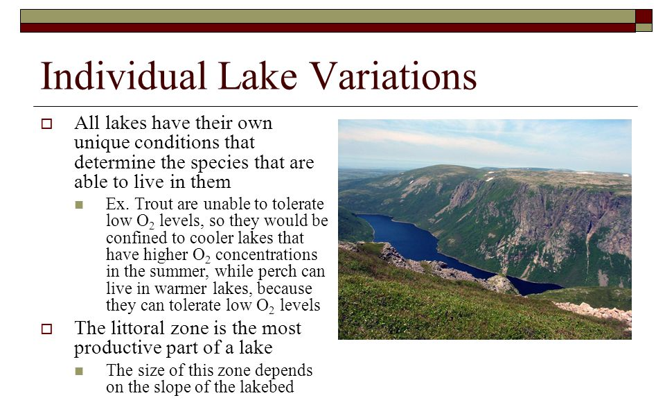 Individual Lake Variations  All lakes have their own unique conditions that determine the species that are able to live in them Ex. Trout are unable