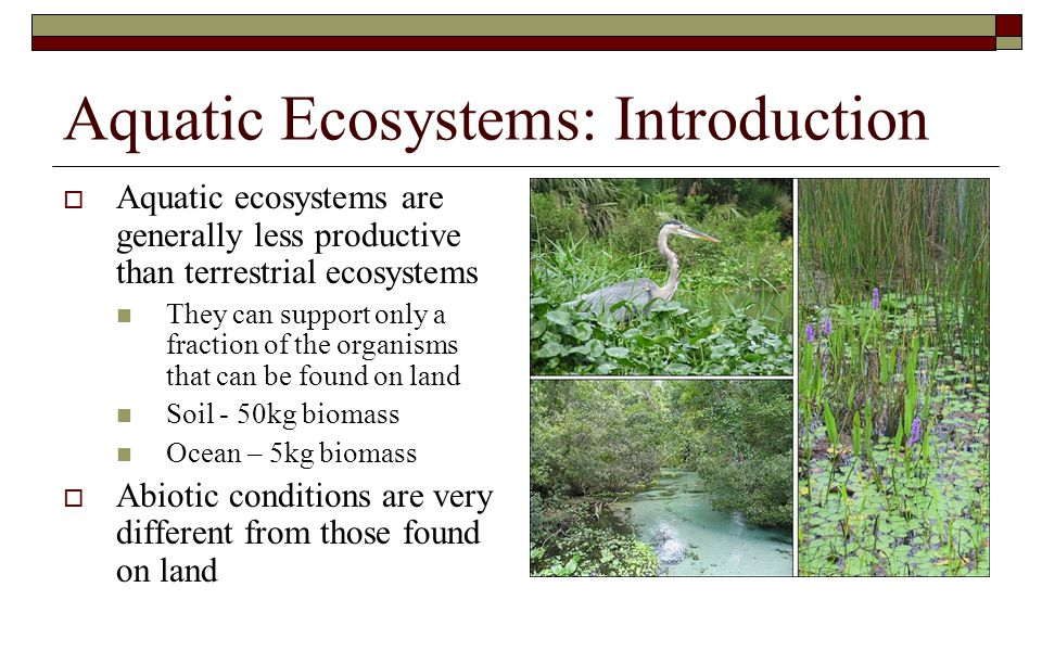 Aquatic Ecosystems: Introduction  Aquatic ecosystems are generally less productive than terrestrial ecosystems They can support only a fraction of th