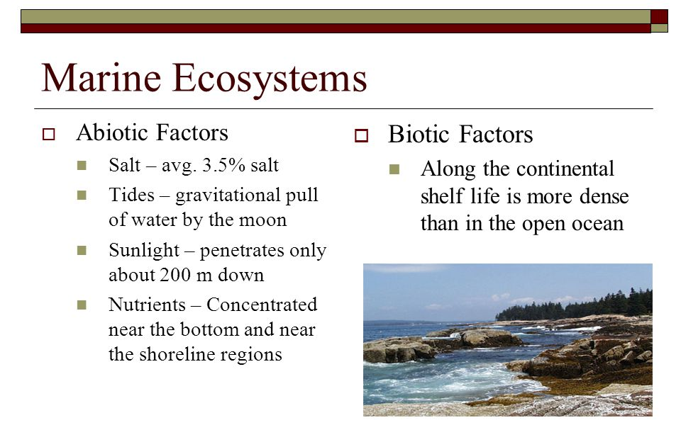 Marine Ecosystems  Abiotic Factors Salt – avg. 3.5% salt Tides – gravitational pull of water by the moon Sunlight – penetrates only about 200 m down
