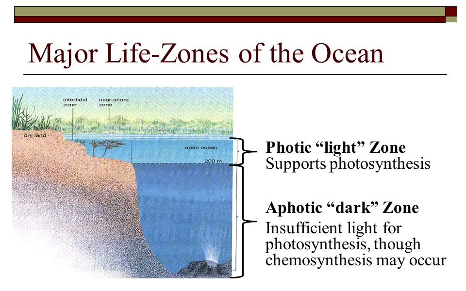 """Major Life-Zones of the Ocean Photic """"light"""" Zone Supports photosynthesis Aphotic """"dark"""" Zone Insufficient light for photosynthesis, though chemosynth"""