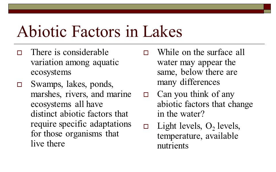 Abiotic Factors in Lakes  There is considerable variation among aquatic ecosystems  Swamps, lakes, ponds, marshes, rivers, and marine ecosystems all