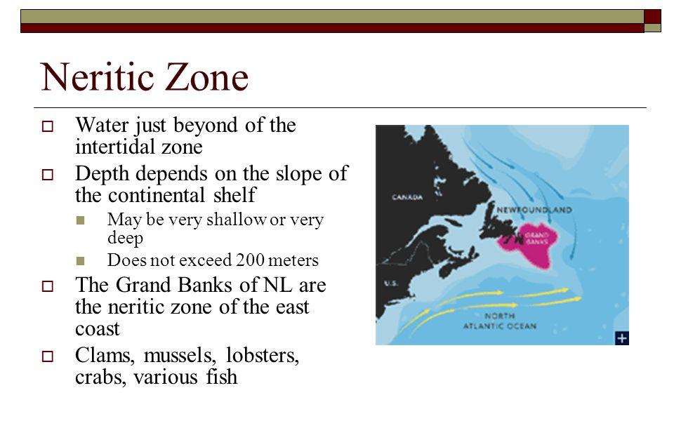 Neritic Zone  Water just beyond of the intertidal zone  Depth depends on the slope of the continental shelf May be very shallow or very deep Does no
