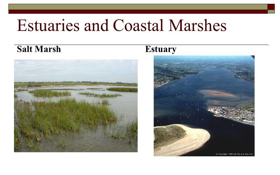Estuaries and Coastal Marshes Salt Marsh Estuary
