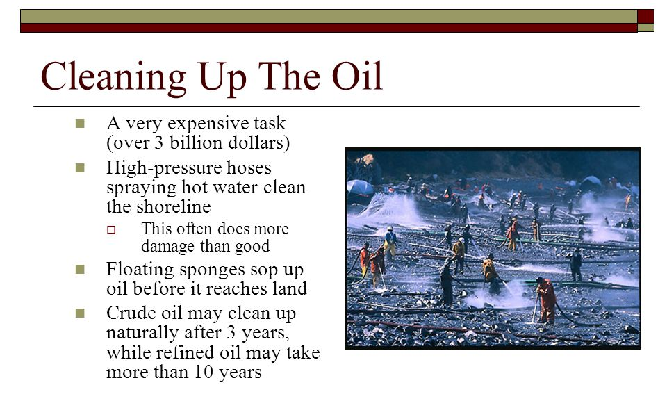 Cleaning Up The Oil A very expensive task (over 3 billion dollars) High-pressure hoses spraying hot water clean the shoreline  This often does more d