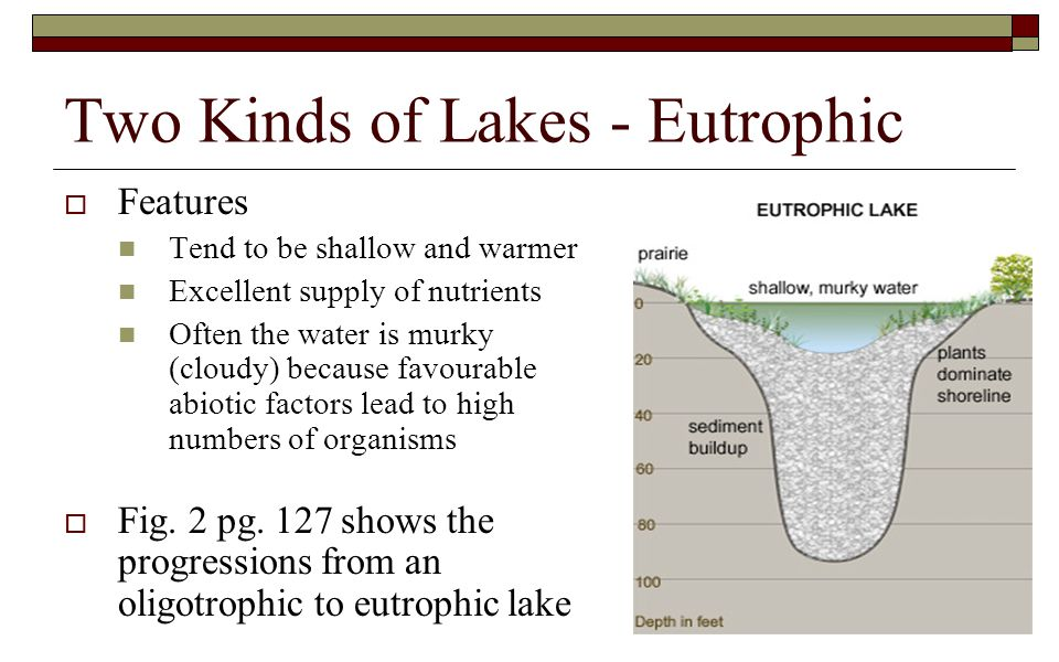 Two Kinds of Lakes - Eutrophic  Features Tend to be shallow and warmer Excellent supply of nutrients Often the water is murky (cloudy) because favour