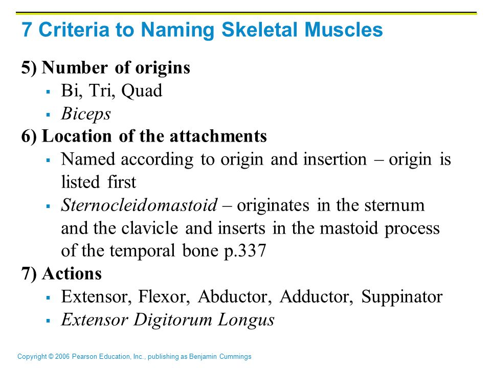 Copyright © 2006 Pearson Education, Inc., publishing as Benjamin Cummings 7 Criteria to Naming Skeletal Muscles 5) Number of origins  Bi, Tri, Quad  Biceps 6) Location of the attachments  Named according to origin and insertion – origin is listed first  Sternocleidomastoid – originates in the sternum and the clavicle and inserts in the mastoid process of the temporal bone p.337 7) Actions  Extensor, Flexor, Abductor, Adductor, Suppinator  Extensor Digitorum Longus