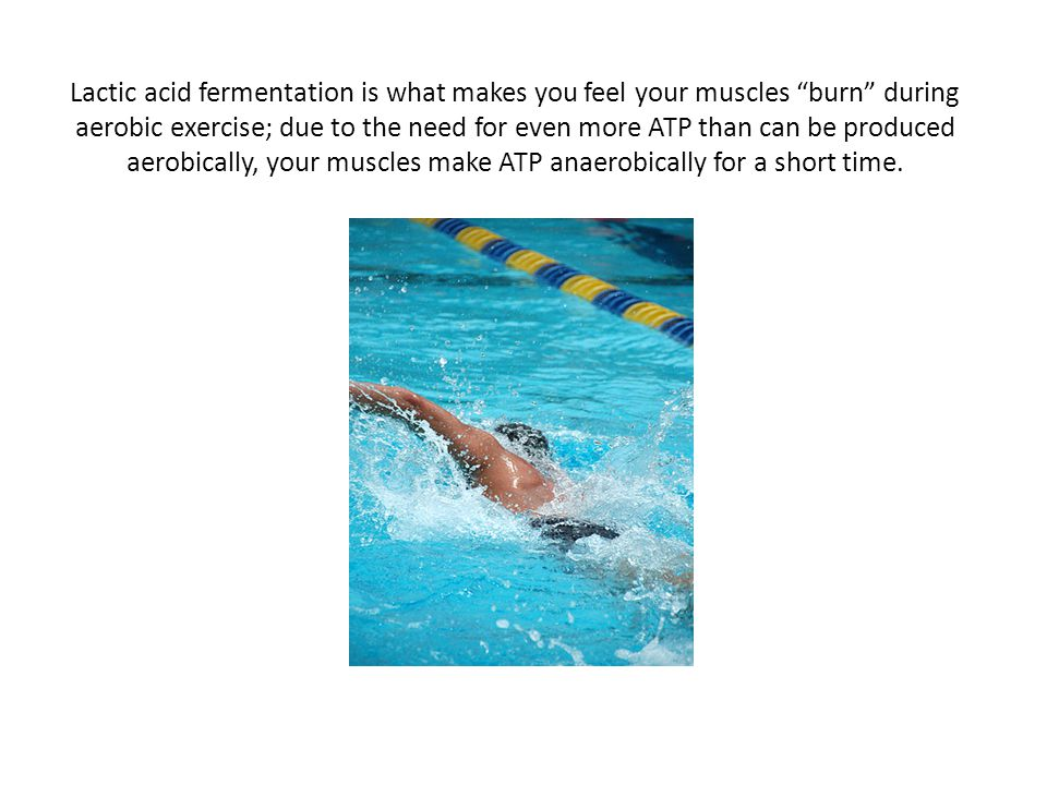 "Lactic acid fermentation is what makes you feel your muscles ""burn"" during aerobic exercise; due to the need for even more ATP than can be produced ae"