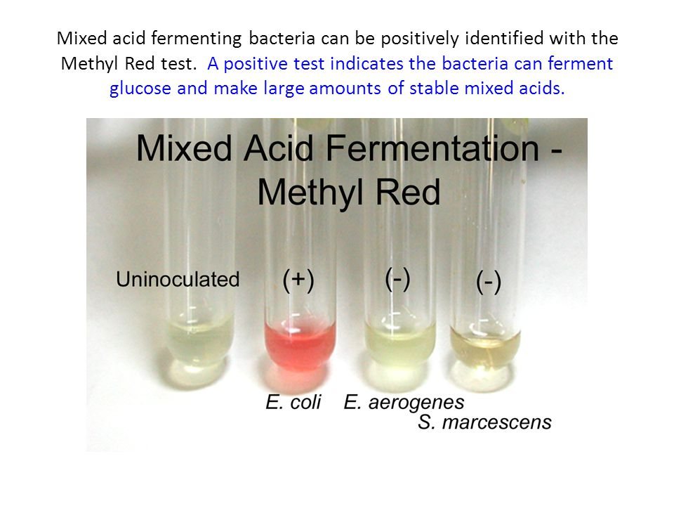 Mixed acid fermenting bacteria can be positively identified with the Methyl Red test. A positive test indicates the bacteria can ferment glucose and m