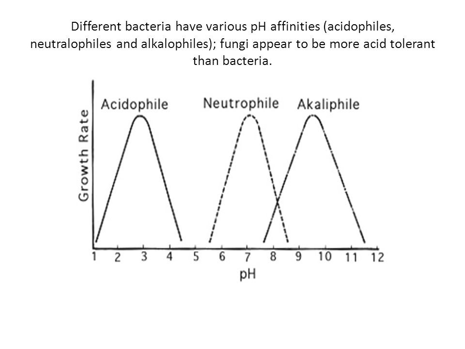 Different bacteria have various pH affinities (acidophiles, neutralophiles and alkalophiles); fungi appear to be more acid tolerant than bacteria.