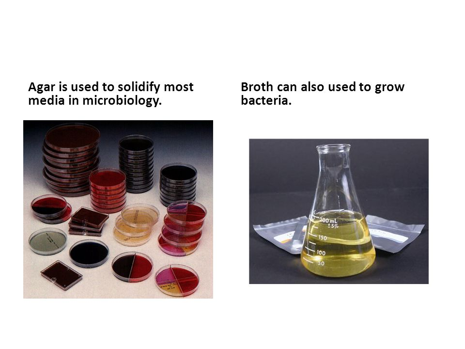 Agar is used to solidify most media in microbiology. Broth can also used to grow bacteria.
