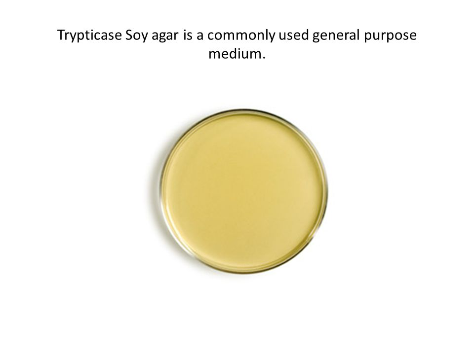 Trypticase Soy agar is a commonly used general purpose medium.