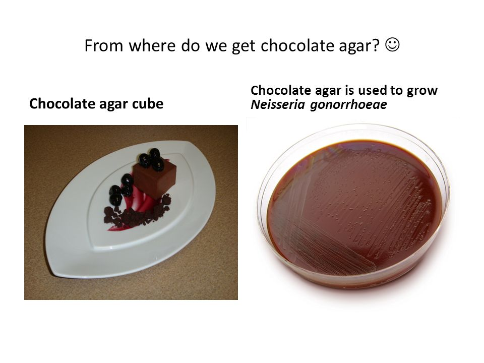 From where do we get chocolate agar? Chocolate agar cube Chocolate agar is used to grow Neisseria gonorrhoeae