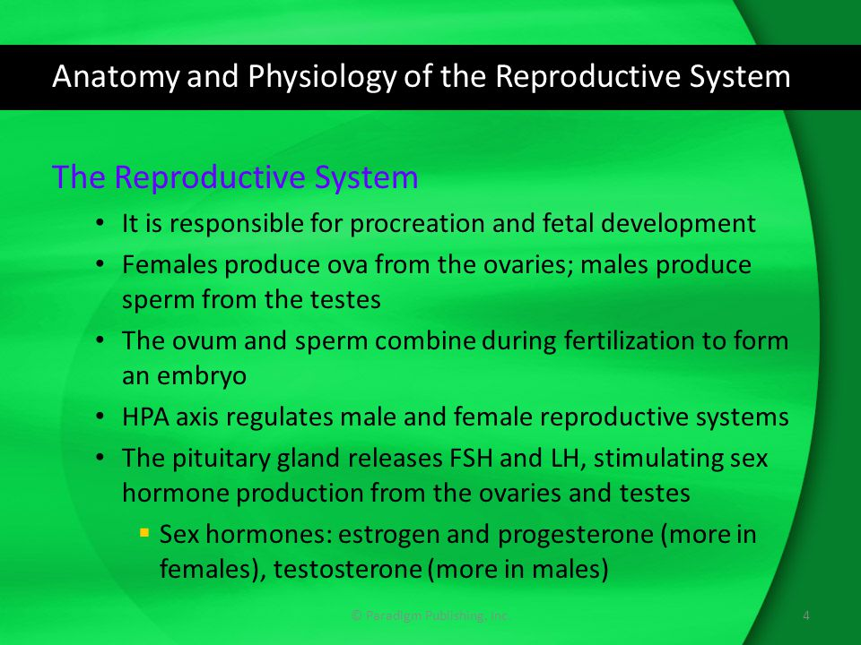 Anatomy and Physiology of the Reproductive System © Paradigm Publishing, Inc.5 Sex Hormone Production and Control The male and female reproductive systems respond to a negative hormonal feedback loop system