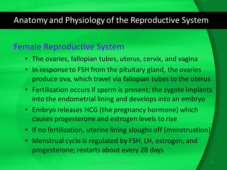 Anatomy and Physiology of the Reproductive System Female Reproductive System The ovaries, fallopian tubes, uterus, cervix, and vagina In response to F