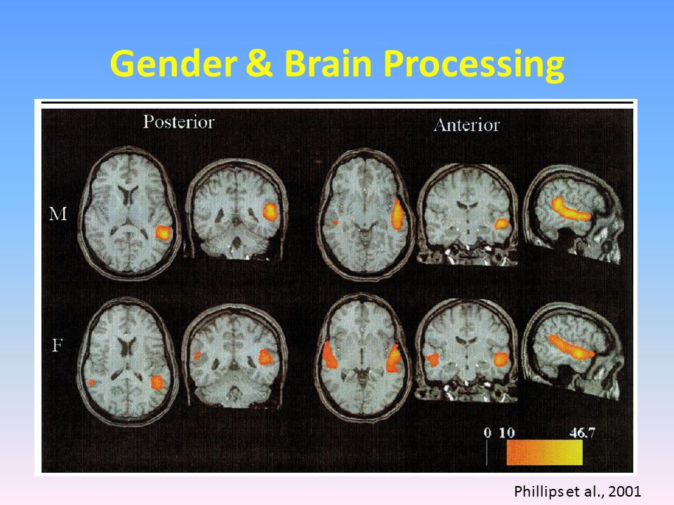 Gender & Brain Processing Phillips et al., 2001