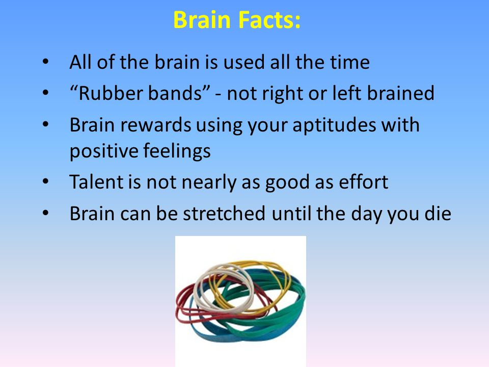 Facts About The Human Brain has about 100 billion neurons ¾ of them are in the cerebral cortex Learning and memory occur when neurons connect (synapses) 1000 to 10 000 connections on one neuron