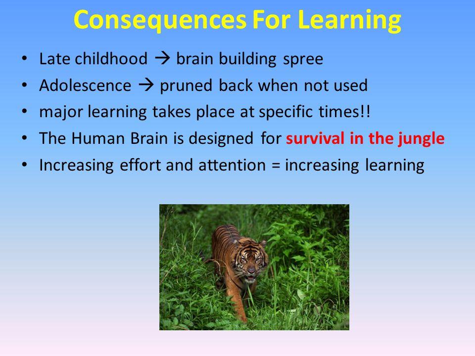 Girls develop prefrontal cortex faster Amygdala controls more of boys' behaviour Stress can lead to better performance The same stress that stimulates boys would shut girls down Gender & Brain Maturity stressperformance