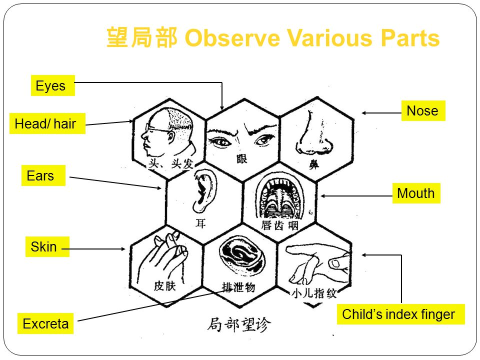Sturdy or weak Active or lethargic Obese or thin 望形态 Shape & Posture