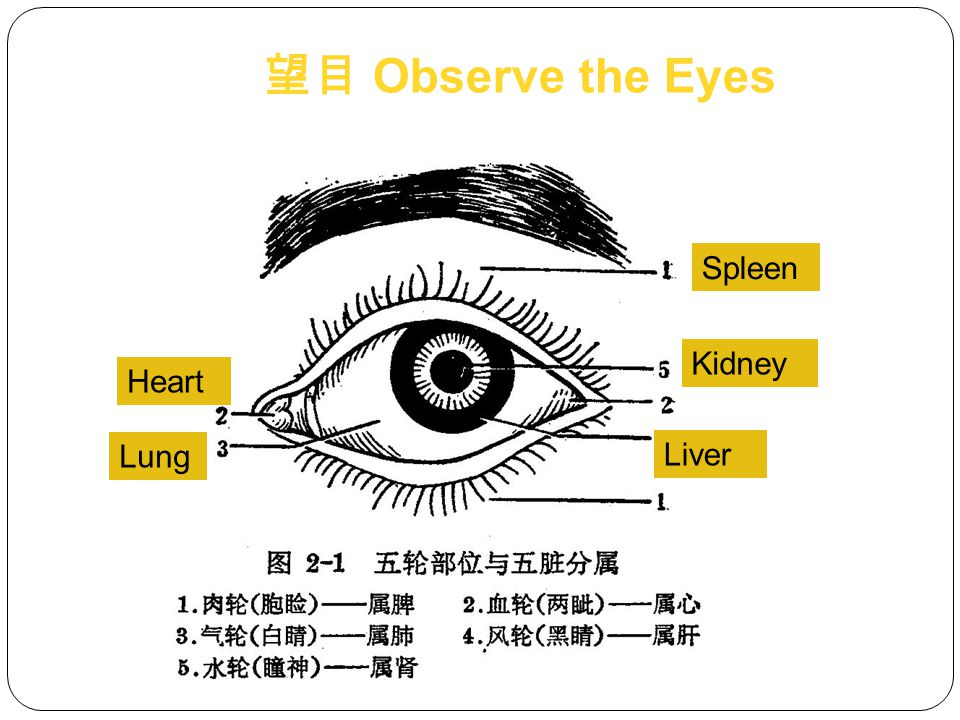 Head/ hair Ears Eyes Nose Mouth Skin Excreta Child's index finger 望局部 Observe Various Parts