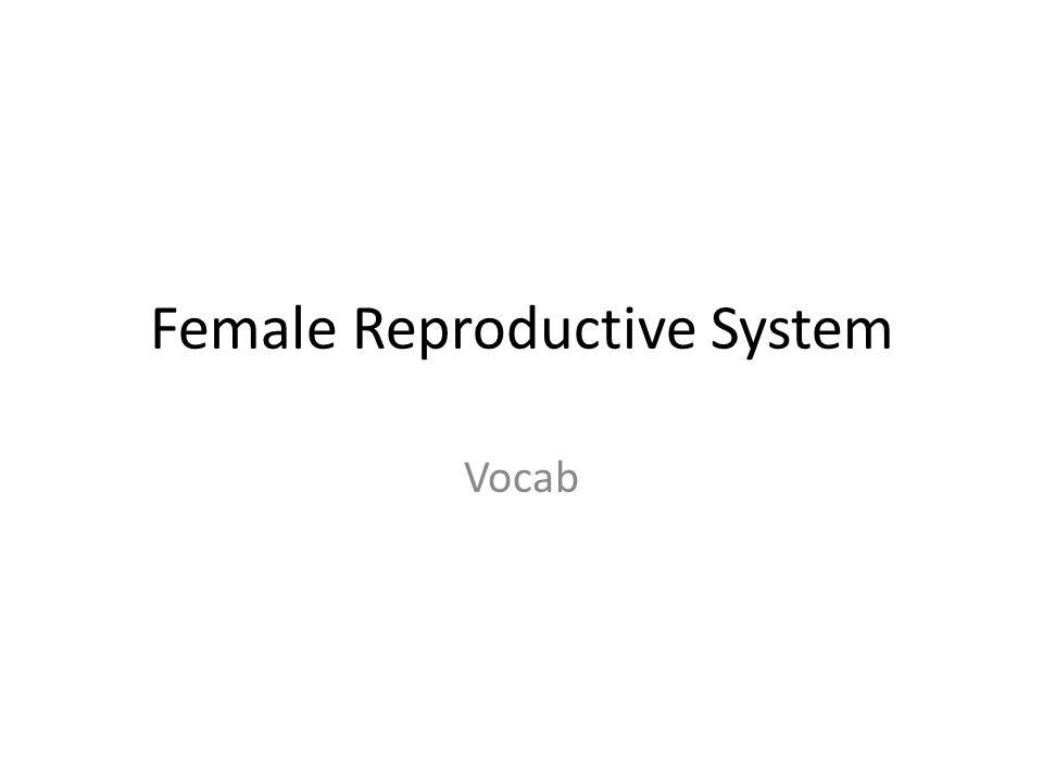 Female Reproductive System Vocab